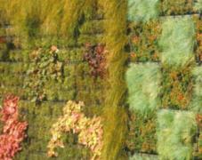 Mur végétalisé, cages métalliques (modulaire)